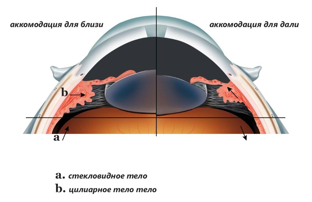 Уникальные технологии для стимуляции цилиарной мышцы
